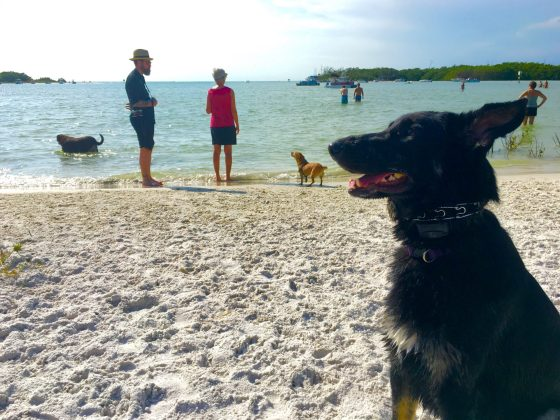 Making friends at the dog beach