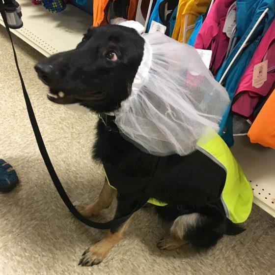 Maybe Dog Dress Up.jpg
